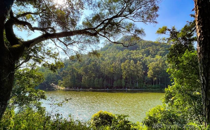 流水響水塘|森林中的天空之鏡 – 一月:落羽松